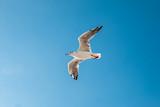 Fototapeta Animals - Biały ptak na błękitnym niebie