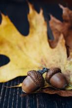 Two Acorns On Fall Oak Leaves