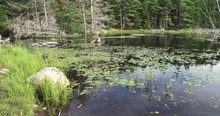 Witch Hole Pond By Forest In Maine