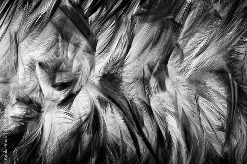 blur feather wool dark black with light abstract background