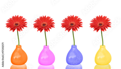 Fototapety, obrazy: Red gerbera flowers in Colorful  vases  isolated on white