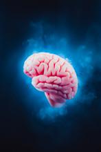 Frozen Brain On A Dark Background / High Contrast Image