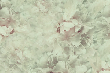 Naklejka Floral vintage beautiful background. Wallpapers of flowers light pink-white peony. Flower composition. Close-up. Nature.