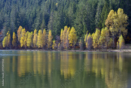 Photo Autumn  with the yellow foliage