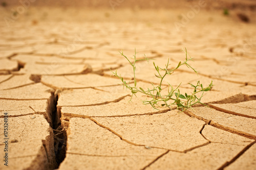 top view cracked dry ground with green plant abstract background #175324924