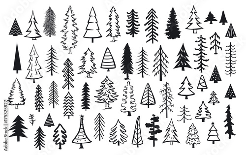 Fotografie, Obraz cute abstract conifer pine fir christmas needle trees collection