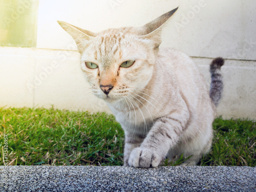 action animal themes cat close up cute cat domestic action cat