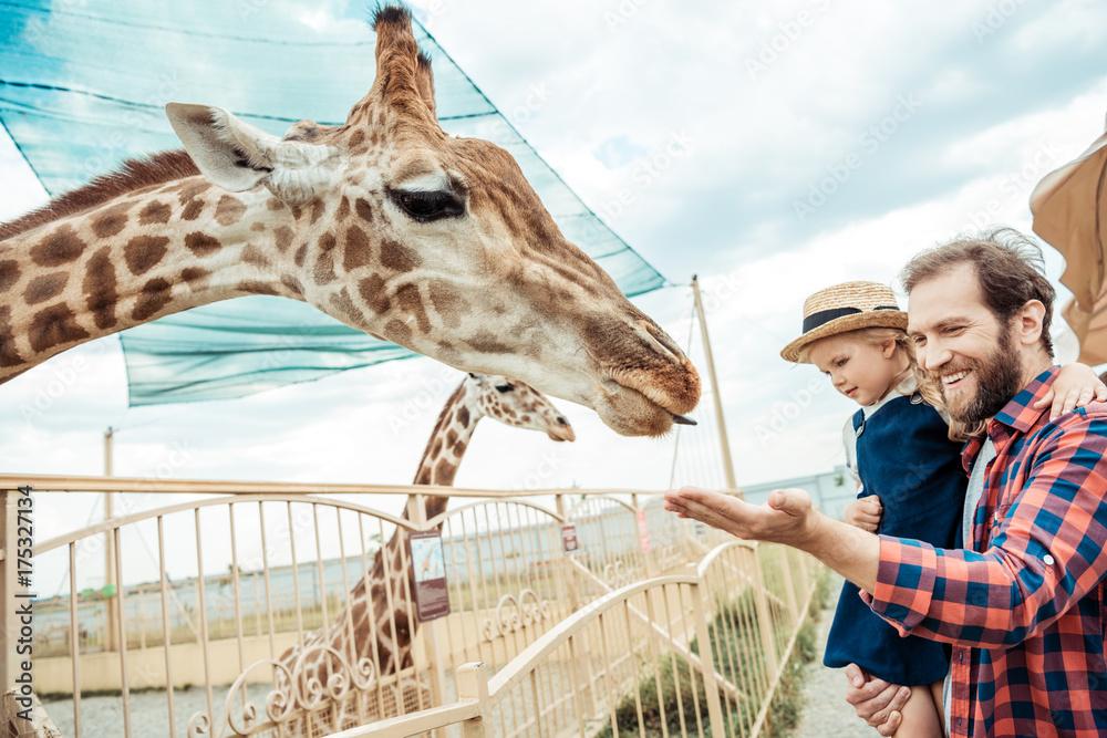 Fototapeta family looking at giraffe in zoo