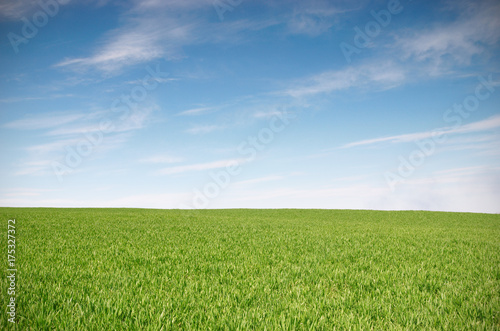 Foto op Aluminium Weide, Moeras Field with green wheat and blue sky
