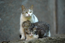 Homeless Cat With Kittens On T...
