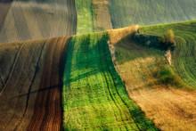 Panoramic View Of The Field Wa...