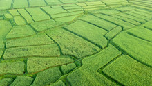 Aerial View Of The Greenrice Field, Almost At The Full Grown, Look Lize A Maze, Nan, Thialand