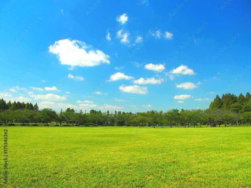 Fototapety, obrazy: 秋の草原と林風景
