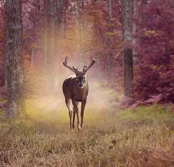 FototapetaDeer in autumn forest