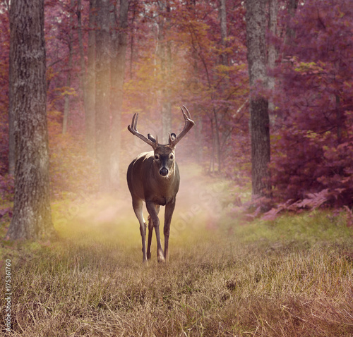 Deurstickers Hert Deer in autumn forest