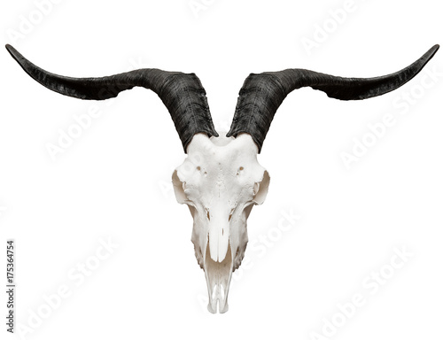 Goat skull isolated on white