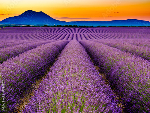 Photo Stands Lavender Lavandes