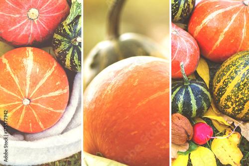 Plakat Kolaż banie w ogródzie. Święto Dziękczynienia, świąteczna dekoracja i koncepcja Halloween. Jesień, jesień tło