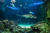 Large sawfish and other fishes swimming in a large aquarium