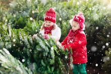 Kids Select Christmas Tree. Family Buying Xmas Tree.