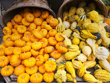 Pumpkins And Gourds Spilling O...