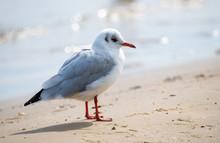 Junge Möwe Am Strand