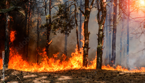 Photo sur Aluminium Feu, Flamme wildfire