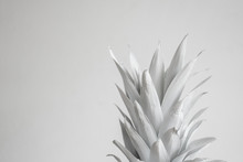 White Crown Of Pineapple