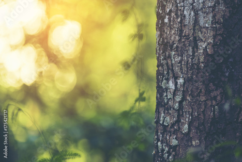 Fotografija  tree and nature