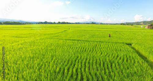 Fotobehang Rijstvelden Image of beautiful Terraced rice field in water season and Irrigation from drone,Top view of rices paddy field,nan,thailand