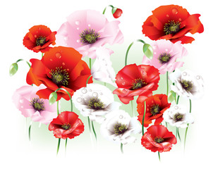 FototapetaBeautiful red, pink and white abstract poppies with water drops