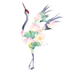 Fototapeta Japoński Watercolor print with crane of lotus flowers. Japanese hand drawn illustration