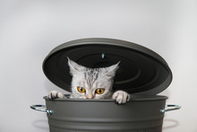 Selective Focus Of A Cat Being Angry In A Grey Bucket With Lid.