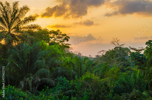 Beautiful lush green West African rain forest during amazing sunset, Liberia, West Africa