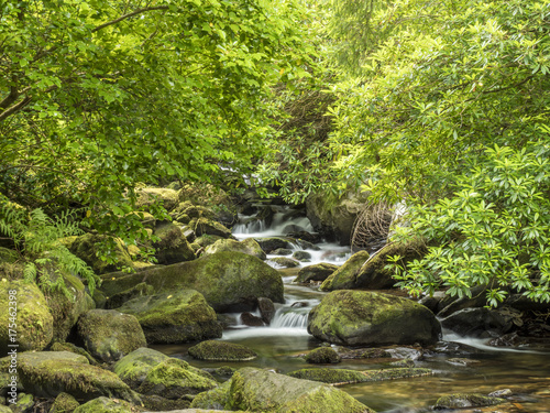 Poster Rivière de la forêt Mountain Stream Ireland