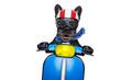 dog on motorbike