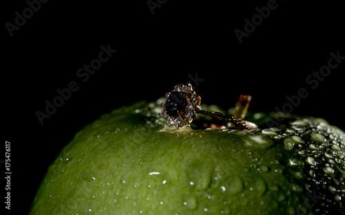Plakat Zielone jabłko z pierścionkiem zaręczynowym