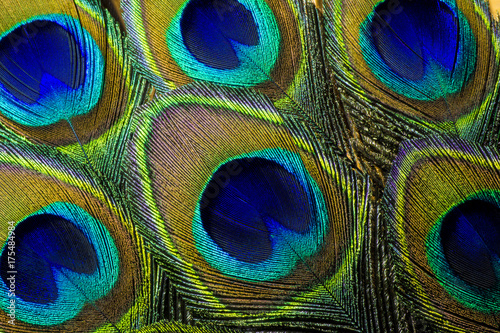 Papiers peints Les Textures Luminous Peacock Feathers. This is a macro photo of an arrangement of colorful and vibrant peacock feathers.