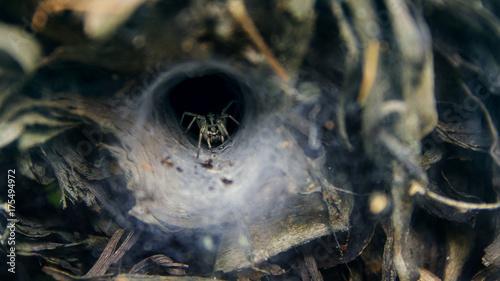 Plakat straszny ciemny pająk