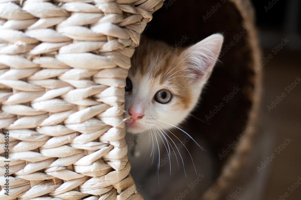 Cat in a Pod