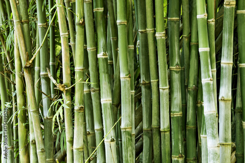 Foto op Plexiglas Groene Beautiful bamboo forest, green nature background.