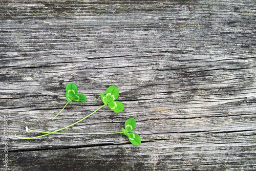 Petal of clover on old wooden background. St. Patricks Day green shamrock .