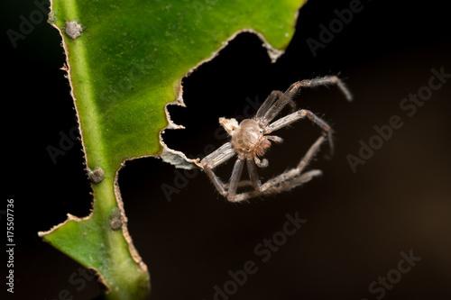 Plakat Makro- pająk