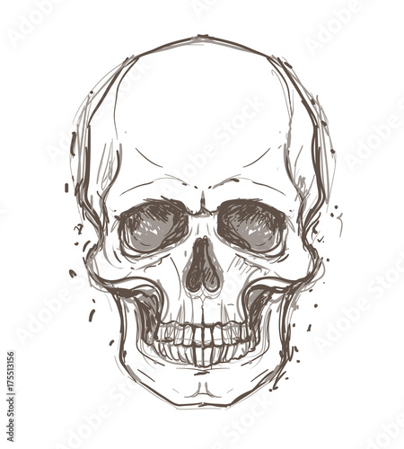 Printed kitchen splashbacks Watercolor skull Sketchy style drawing of human skull, human head, isolated on white. Tattoo design element. Vector illustration.