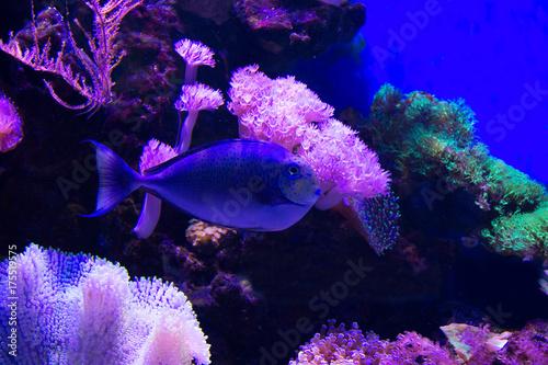 Fototapeta sea anemone and coral on sand over deep blue background. obraz na płótnie