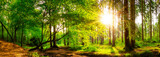 Fototapeta Las - Panorama of a beautiful forest with bright sun