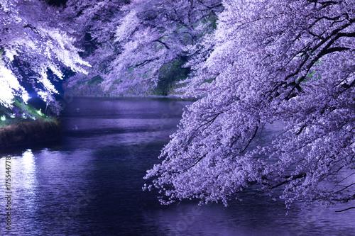 Plakat Wiosna w Tokio, Chidorigafuchi, zapala się