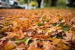 Fall Leaves on the ground Blurred out
