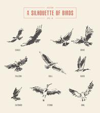 Silhouettes Birds Eagle Owl Drawn Vector Sketch