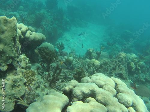 Obraz na dibondzie (fotoboard) ryba